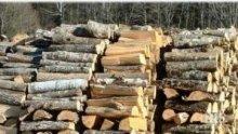 Откриха 20 кубика нелегални дърва в двора на фирма