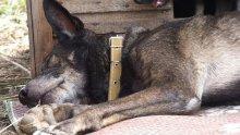 Крадци отровиха 3 кучета, за да оберат жилище