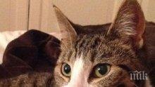 Домашна котка спаси стопаните си от кралски питон