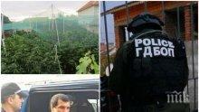 РАЗКРИТИЕ СЛЕД НАРКОАКЦИЯТА:  Барбарона и Плешивия арестувани с чували с дрога в къщата на Данчо Топа