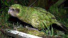 Учени откриха останки от огромен папагал, обитавал Нова Зеландия
