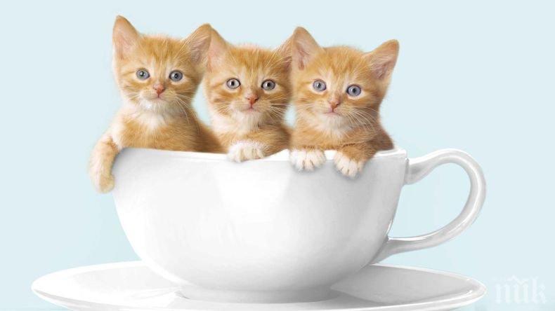Днес е Международният ден на котките: в Англия живеят 8 милиона писани, мъркането им е полезно за здравето на костите (СНИМКИ)