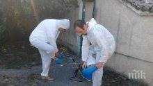 ГОРЕЩА ТЕМА: Започна доброволното умъртвяване на прасета в Пазарджишко (СНИМКА)