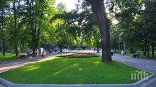 Започна разчистването на опасни дървета в Градския парк на Ямбол