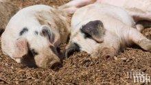 Северна Македония забрани вноса на свинско от Сърбия