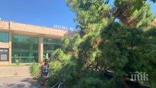 """НА КОСЪМ: 10-метрово дърво се стовари върху нова """"Шкода"""" на паркинг в Слънчев бряг"""