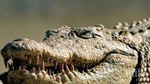 УЖАС: Крокодил изяде малко дете