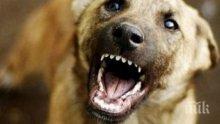 """ОТ ПОСЛЕДНИТЕ МИНУТИ: Улично куче нахапа жестоко дете, карат го спешно в """"Пирогов"""""""