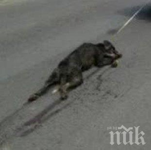 ШОКИРАЩО ЗВЕРСТВО: Дърт рокер влачи куче, вързано с въже за мотора