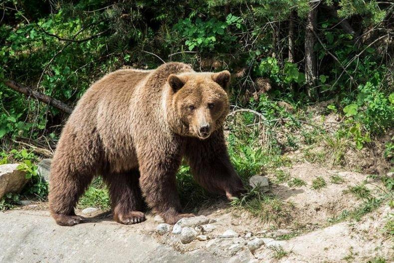 Почина мечката Габриела, не дочака пловдивския зоопарк