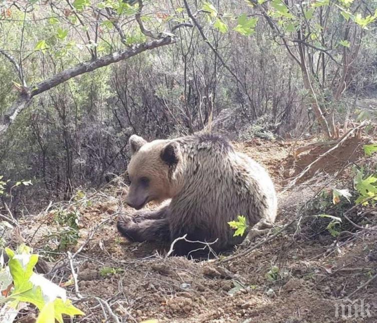 Осъдиха на разстрел мечка, изровила гроб