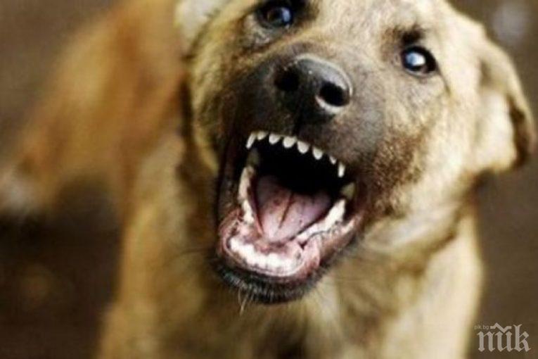 Ухапаното от куче дете от Дупница е без опасност за живота