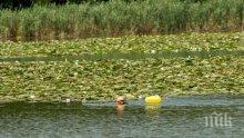 Българин постави рекорд на Гинес за плуване с една ръка