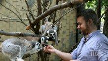 Шефът на Софийския зоопарк се извини за мерките заради африканската чума по свинете