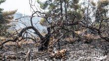 Овладяха пожара на гръцкия остров Евбея