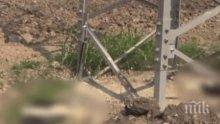 ТРАГЕДИЯ: Масова смърт на щъркели край Бургас заради електрическите жици