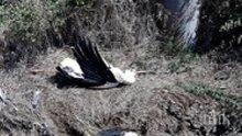 УЖАС: 17 умрели щъркели под електопровод намериха при проверка в Бургас