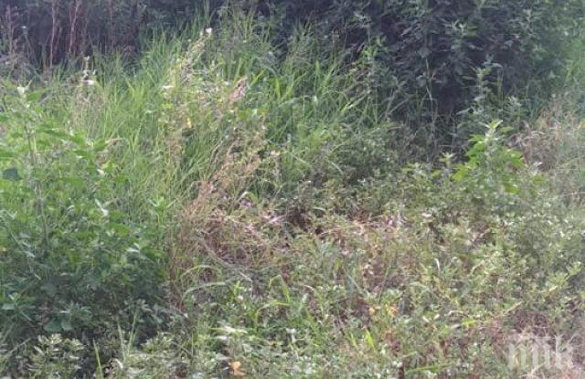 Частният парк на Байрям Солак заприлича на джунгла, свидят му се 300 лв. за косене