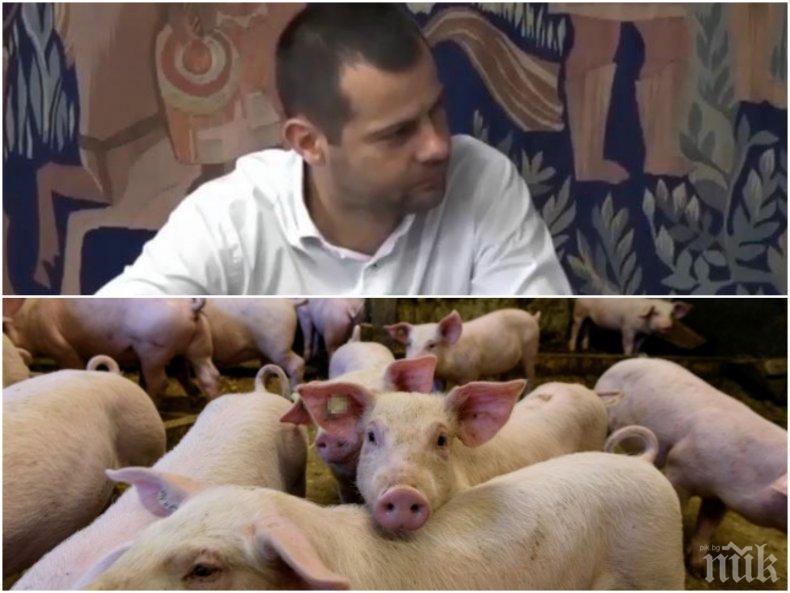 САМО В ПИК TV! Шефът на Съюза на ловците и риболовците с нови подробности за чумата по прасетата