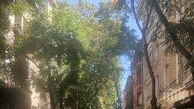 ПЪРВО В ПИК: Сигналът за бомба в БНТ затвори няколко улици (СНИМКИ)