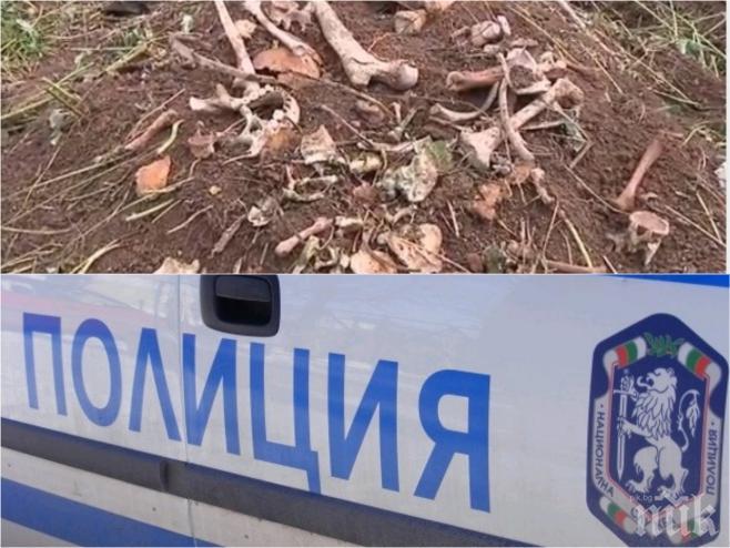 ПЪРВО В ПИК: Спешна експертиза за костите край Враца - проверяват дали са животински