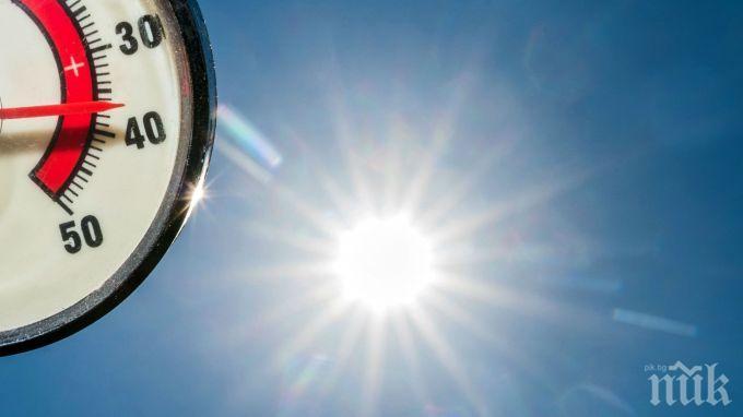НЕ Е ЗА ВЯРВАНЕ, НО... Шишковците понасят по-добре жегата