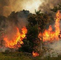 Бразилия склони да приеме помощ за Амазония