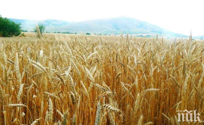 Земеделската земя край Русе поскъпна