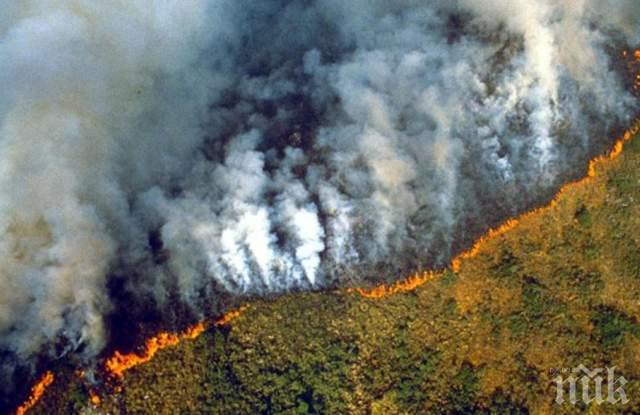 Леонардо ди Каприо дава 5 млн. долара за борбата с пожарите в Амазония