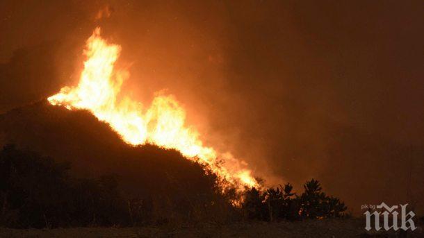 ОГНЕНА СТИХИЯ: Пожар изпепели заведение в курорта Елените