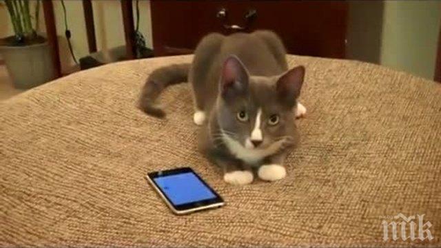 Спипаха котка, доставяла мобифони на затворници