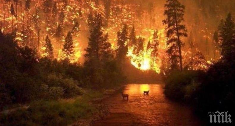 ЖЕГА: 15 области в страната са застрашени от пожари днес (КАРТА)