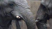 Дания купува четири циркови слона и ще ги пенсионира