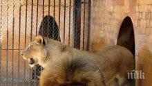 Зоологическата градина в Ловеч вече има лиценз