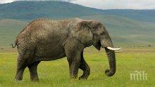 Слон се разходи по улиците на беларуско село