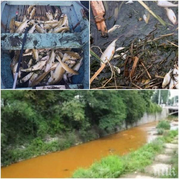 Мор в язовир Пчелина! Мазни петна и купища отровена риба (ВИДЕО)