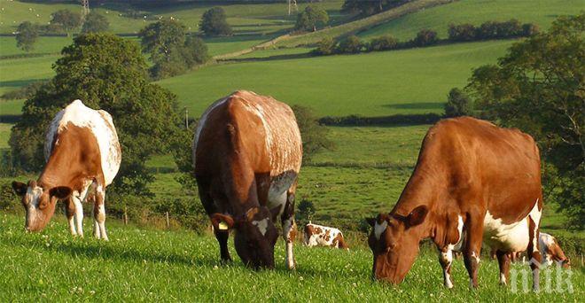 ЗАРАДИ БРЕКЗИТ: Фермерите от Северна Ирландия се страхуват от фалити