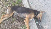 Арестуваха убиец на куче със законни пушки