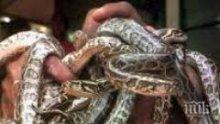 Митничарите във Виена спипаха австриец с 88 змии в куфара си