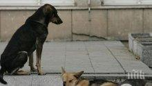 Доброволци броиха бездомните кучета в Пазарджик