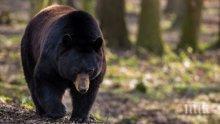 Мъж избяга и заряза жена си в гората с мечка