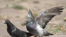 Гълъб се изходи върху главата на политик