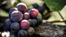 Тракийски бог благослови гроздето и виното от новата реколта