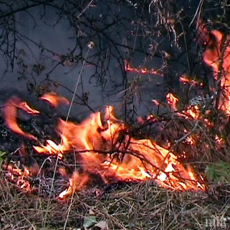 Гора се запали във Варненско