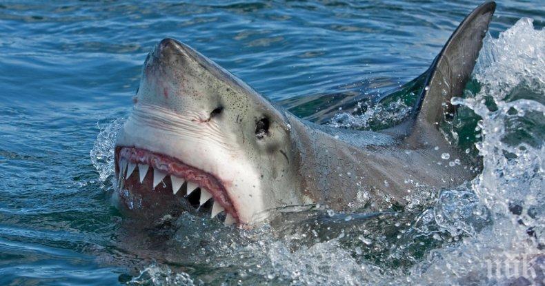 НА КОСЪМ: Дрон спаси сърфист от акула (ВИДЕО)