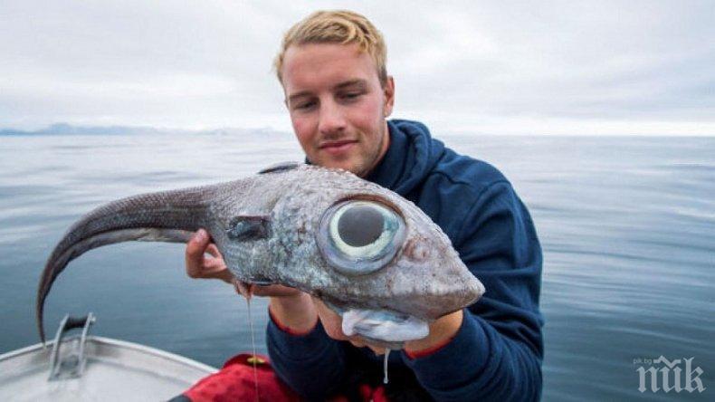 НЕ Е ЗА ВЯРВАНЕ Норвежки рибар извади чудовище с огромни очи