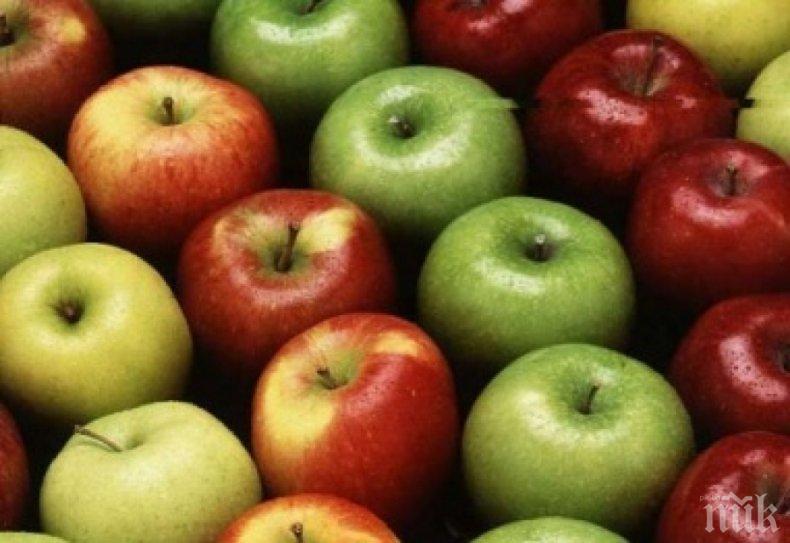Овощари скочиха срещу ниските изкупни цени и вноса на плодове