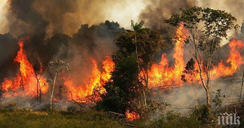 Пожарите в Боливия са унищожили повече от 4 милиона хектара гора