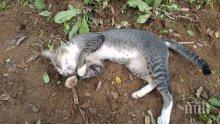 ИЗРОД: Мъж изхвърли котка през терасата в Пловдив