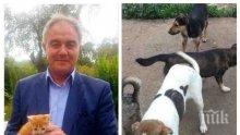 СКАНДАЛНО ЛИЦЕМЕРИЕ: Кметът на ДеБъ Спартански излъгал нагло, че ще прави приют за животни със 100 бона - проектът провален, но сега се рекламира с бездомни котки!